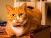 Timothy (Arutemu) Tags: a7rii ilcea7rii sonya7rii tamron tamronspadaptall3580mmf283801a manualfocus mirrorless cat pet animal 猫 ねこ 動物 タムロン レンズ legacylens