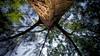 Sony A6000 + Voigtländer Ultra Wide-Heliar 12mm f/5.6 Aspherical III (Teilor Lopes) Tags: voigtlander heliar wide wideheliar 12mm f56 lm leica leicam sony a6000 emount lmmount tree santacatarina sc praia do siriú upsidedown árvore brasil blue green sky vision