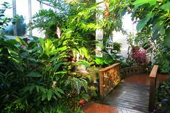 Key West (Florida) Trip 2017 7290Ri 4x6 (edgarandron - Busy!) Tags: florida keys floridakeys keywest butterflyhouse keywestbutterflyandnatureconservatory
