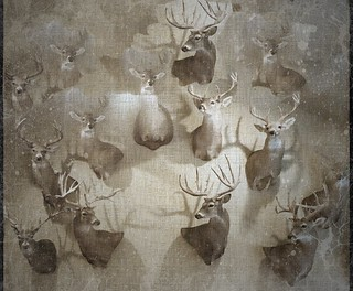 Herd {22/365}