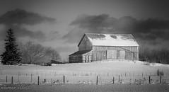 Winter Farm (maureen.elliott) Tags: 7dwf blackandwhite landscape rural farm barn fields winter snow ontario fence