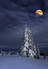 Winter Forest with fantasy Moon in the Night Sky (Crater Lake NP, OR) (Sveta Imnadze) Tags: landscape winter nature frees snow themoon frost sky clouds