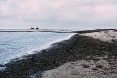 3 (MobilShots) Tags: blende1net patrickgorden beach fotografhamburg fuji fujifilm laboe ostsee outdoor sand sea strand urban water xt1 horse people nature