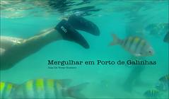 Mergulhar en porta galinhas  - Diaz De Vivar Gustavo (Diaz De Vivar Gustavo) Tags: mergulhar en porta galinhas diaz de vivar gustavo recife pernambuco nordeste ipojuca snorkel peces tropicales vacaciones