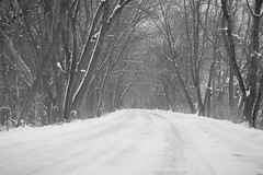 entering wonderland (jimmy_racoon) Tags: 70200 f4l is canon 5d mk2 bw nature roadway winter woods 70200f4lis canon5dmk2