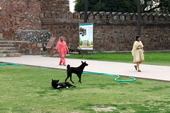 enjoying the park (kexi) Tags: delhi india asia park people women 2 two pair black dogs green canon february 2017 wall fortification grass instantfave