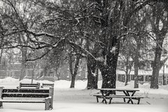 Silence (jorgegomez23) Tags: winter cold snow trees white canada montreal storm canon eos sigma18250 bench bancos lachine grey pictureoftheday piclove picture flickr hiver arboles blanche noir 70d snowfall wednesdays picoftheweek fotodeldia streetphotography photographe photodujour photodelarue