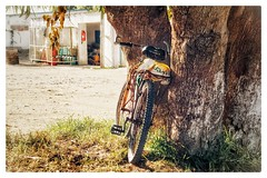 Waiting to be cycled (kaberdi) Tags: mountainbike bicycle morocco maroc oualidia