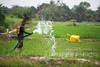 Farming project (Albert Gonzalez Farran) Tags: cultivation development economy farm farmproject farmer farming localeconomy project ruraleconomy support paynesville liberia