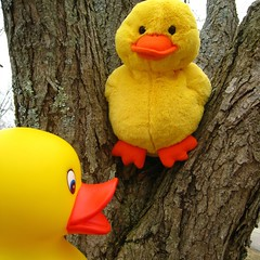 april says.... fluffy, let's have a chat about trees and ducks (muffett68 ☺ heidi ☺) Tags: ansh scavenger4 inatree odc branch
