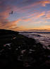 _DSC9205-2 (exceptionaleye) Tags: a6000 sandiego lajolla shore shoreline exceptionaleye coast coastalview ilce6000 southerncalifornia sonyphotographing sonya6000 sonnarte1824 zeiss za beach color seagull sunset tidepools ngc california sony