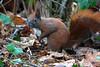 e4 (peterphot) Tags: natur sachsen sonytamron600 eichhörnchen wildtiere wildanimals januar garten