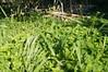 Ψίνθος (Psinthos.Net) Tags: ψίνθοσ psinthos ιανουάριοσ γενάρησ january winter χειμώνασ φύση εξοχή nature countryside afternoon απόγευμα απόγευμαχειμώνα χειμωνιάτικοαπόγευμα λουλούδια άγριαλουλούδια αγριολούλουδα wildflowers yellowflowers κίτριναλουλούδια χόρτα greens field χωράφι οξαλίδεσ οξαλίδα sorrels sorrel ξυνιέσ ξινιέσ ξινάκια ξυνάκια ηλιόλουστημέρα sunnyday φώσ φώσήλιου φώσηλίου sunlight light