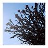 Plane Tree (ngbrx) Tags: lucerne switzerland luzern plane tree baum platane sky himmel zentralschweiz central schweiz suisse svizzera vierwaldstättersee lake