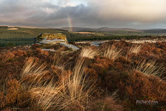 Felicitous Arc (http://www.richardfoxphotography.com) Tags: dartmoorlandscape dartmoornationalpark devonlandscape rainbow stormclouds rainshower heather grasses moorland sunrise outdoors