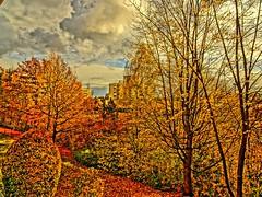 Herbst in Königswiesen (johannroehrle) Tags: herbst himmel hdr holz bayern baum blätter bäume farben flora wolken automne autumn autunno regensburg natur nature natura niebo clouds chmury