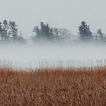 Trees And Reeds In The Fog 03 thumbnail