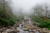 because a mountain stream knows it all (eyenamic) Tags: mist forest rock river tree wood stream brook fog hills mountains srikhola darjeeling westbengal nikon d5100