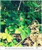 Wildlife (DM Fotografie) Tags: wald wildlife spinne spider raupe tiere tiger swan schwan marienkäfer animals dmfotografie