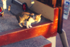 IMG_0168 (giltay) Tags: diana diana38mmsuperwide sunset cat
