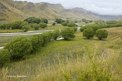 Molesworth Station (rebecca bowater nature photographer) Tags: trees river landscape hills willowtrees