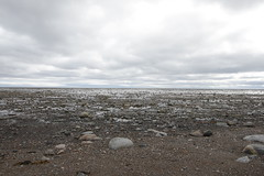 Flat rocky beach scene with clouds overhead (Blue Tale) Tags: beach water ocean rock sky sea nature horizon sand outdoor pebble shore seashore cloud landscape rocky coast seascape travel ecoregion group walking wetland herd cloudy tundra outdoors stone sandy calm storm summer tide white pebbles scenery fall daylight arctic arcticlandscape brown gray canada cold day ground isolated land north place