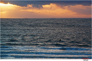 Swimming the surf in the late afternoon