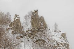 Winter landscape with chamois (Michele Remonti) Tags: winter landscape chamois rupicapra pentax alps alpi lombardy lombardia italia italy