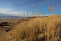 Dune (D. Inscho) Tags: ucluelet canada bc vancouverisland pacificnorthwest beach dune wickaninnishbeach