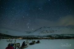 Territoire sans frontière/Borderless territory/Gränslös området (Elf-8) Tags: norway tromsø tamok lyngsfjord night reindeer sleigh ride star