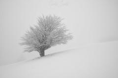 White morning (GorkaZarate) Tags: white morning nieve snow urbasa vitoria alavavision amaneces sunrise domingo sonymage nikon filtros clave alta paisaje landscape naturaleza nature