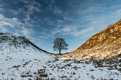 Sycamore Gap (steveniceton.co.uk) Tags: sycamoregap hadrianswall northumberland england roman