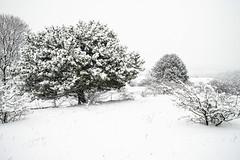 Winter on the Perchtoldsdorfer Heide (a7m2) Tags: naturschutzgebiet perchtoldsdorf heide mödling hiker biker sport erholung urlaub heuriger loweraustria flora fauna schwarzföhre föhrenberge