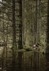 Forest (Sran Vld) Tags: naturalphenomenon forestlandscape foresttrees forest reflections reflection overload nature outdoor woods landscape green trees spring trunk tree environment scenic europe deciduous scenery foliage fresh pine brown background beautiful coniferous path explore national geographic