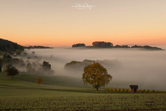 Nebel / Fog (Claudia Bacher Photography) Tags: nebel fog natur nature sonnenaufgang sunrise himmel heaven herbst autumn baum tree landschaft landscape leefilters nebelmeer outdoor schweiz suisse switzerland sonya7r zürichunterland