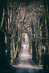 DSC_0048 (karol.ox) Tags: cemetery slovakia kosice trees alley