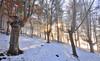 Magical winterlight (Hector Prada) Tags: bosque invierno luz nieve niebla bruma contraluz hojas forest winter light snow mist fog backlight leaves naturaleza nature hectorprada paísvasco basquecountry