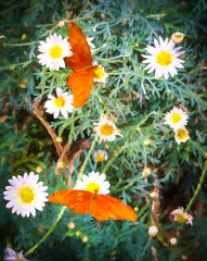 Butterflies and Flowers Impressionist Digital Art (randyherring) Tags: az arizona phoenixdesertbotanicalgarden bloom butterfly desertplants kitlens wildflower phoenix