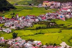 Tam Son v zelené záplavě (zcesty) Tags: výhled vietnam23 terasa rýže pole město leteckýpohled vietnam dosvěta hàgiang vn