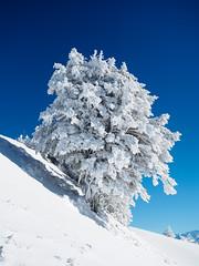 Winter (torremundo) Tags: landschaften berge winterlandschaften schnee rigikulm schwyz schweiz