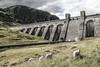 Looking for Hans Brinker (Ramireziblog) Tags: hans brinker dijk dike waterreservoir scotland schotland schapen sheep landscape landschap canon 6d
