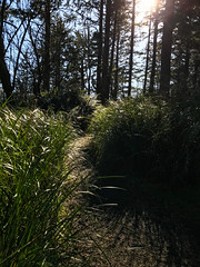 On the Cape Disappointment Lighthouse Trail (ScottElliottSmithson) Tags: dtwpuck scottsmithson scottelliottsmithson pacificnorthwest nature landscape iphone