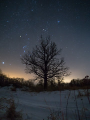 Orion (1 of 4) (jvneu) Tags: orion belt constellation hunter night sky astrophotography winter cold stars star manitoba canada snow tree forest