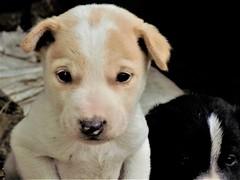 the puppy (saurabhsarthak) Tags: cute puppy inocent nikoncoolpixl340 nikon amateur day eyes pointandshoot