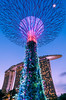 Giant supertree (starlightz82) Tags: singapore asia mbs marinabaysands gardensbythebay landscape bluehour evening cityscape urban