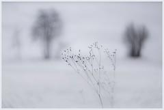 silence (i.v.a.n.k.a) Tags: metaphor silence winter snow frost poetic ivanadorn ivanahesova sonyalpha