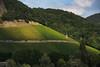 Vinyards (gpa.1001) Tags: germany deutschland rhinevalley rheintal rhineriver rheinfluss vinyards