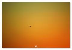Más vale...que... (_Joaquin_) Tags: joalc joafotografia nikond3200 nikkor55300mm montevideo uruguay airelibre flickr teleobjetivo zoom ramblademontevideo sol playa mar