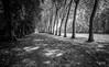 en passant par Vaux le Vicomte (Jack_from_Paris) Tags: jpr7600d800ebw nikon d800e nikkorafs24mmf14ged 24mm ligthroom capture nx2 wide angle prime lens noiretblanc bw monochrom vaux le vicomte france fouquet maincy parc château castle jardin landscapre paysage promenade arbres platane trees ombre allée