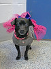 Mia 2  (5) (AbbyB.) Tags: dog canine shelter pet rescue adopt dachshund mtpleasantanimalshelter easthanovernj newjersey shelterpet petphotography